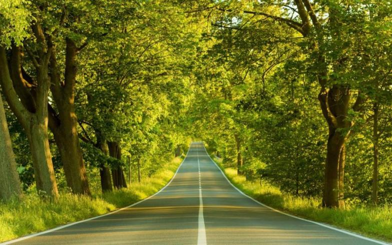 raipur-news-cut-hundreds-of-trees-in-two-years-do-not-leave-the-old-trees-associated-with-the-city